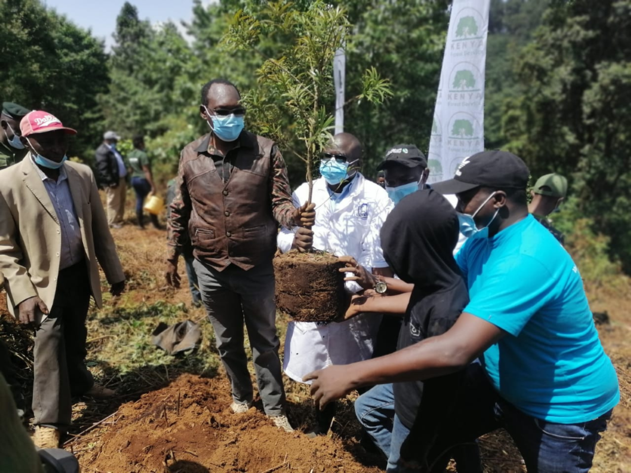 TREE PLANTING EXERCISE